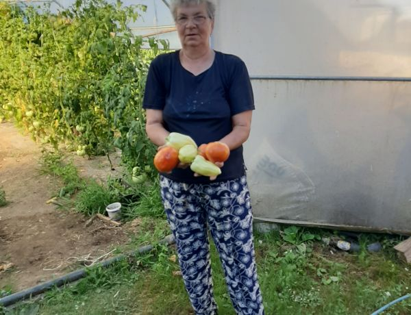 Zarifa Arapović